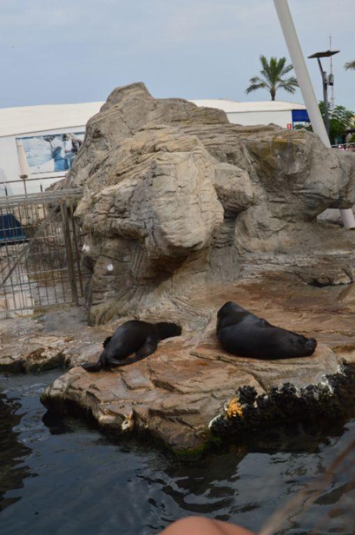 una visita allo zoo